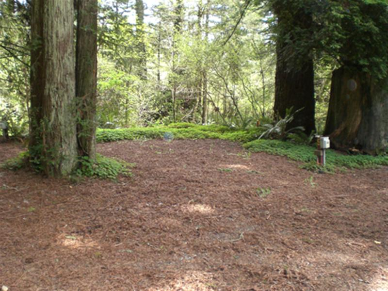 Camping Com The Redwoods Rv Resort Photo Gallery